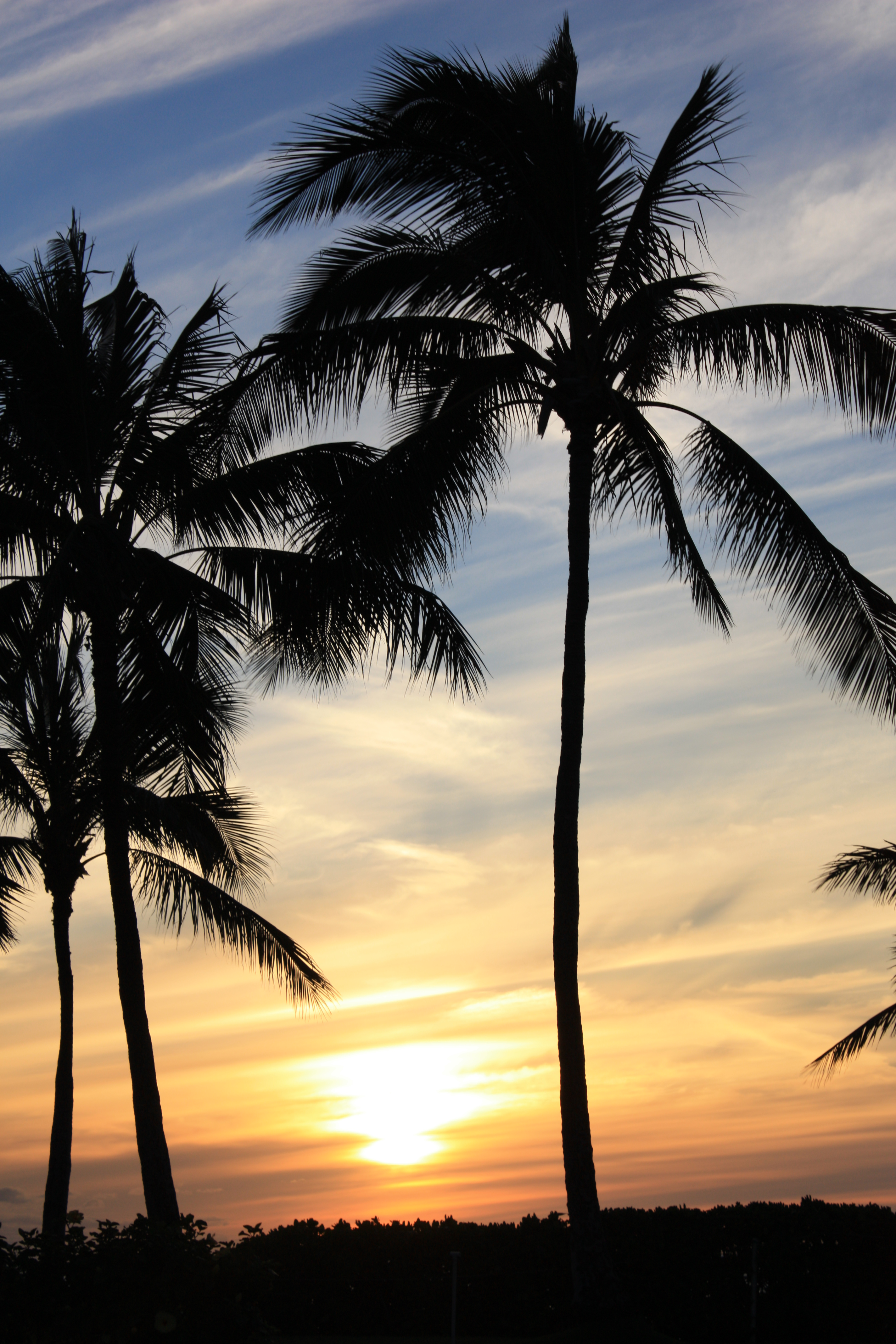 palms-sunset-big